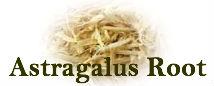 """""""Astragalus"""