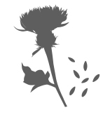 Milk Thistle icon
