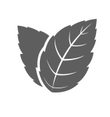 Peppermint leaf icon