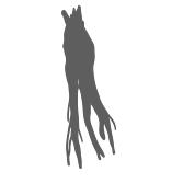 Yellow dock root icon