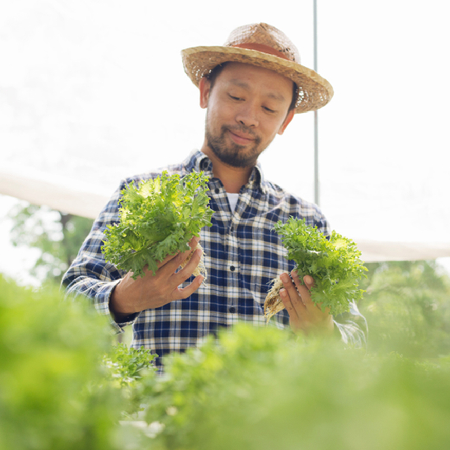 It's Easy & Absorbable – Man choosing organic lettuce at an outdoor farmers market