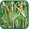 Vinagre Orgánico de Bambú