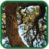 Organic Wood Vinegar