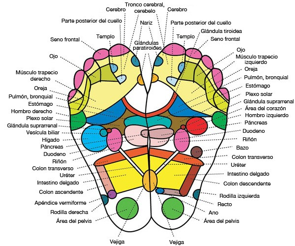 Foot Reflexology / Acupuncture Chart